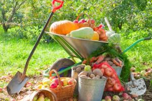 Как  увеличить плодородие почвы