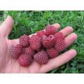 Саженцы плодово-ягодные (14)