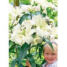 Луковица лилии Претти Вумен (лилия-дерево)
